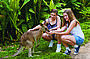 Feeding kangaroos at Koala Gardens